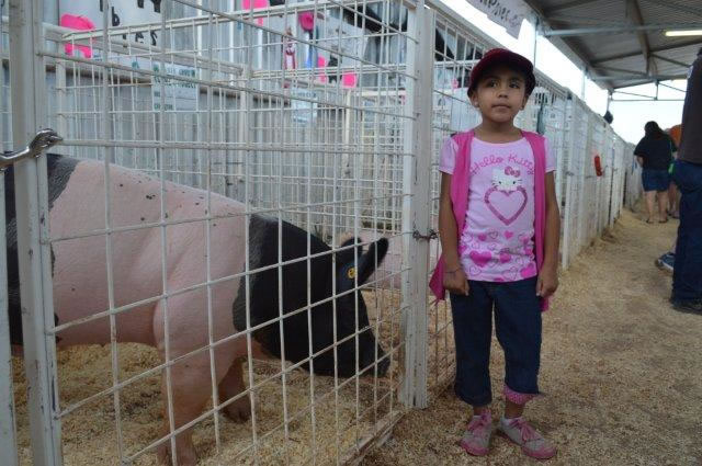 A little girl stands near a pig.